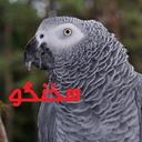 کاسکو سخنگو (طوطی)