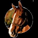 همه چیز در مورد اسب